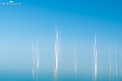 Forêt marine (parc d'éoliennes de Zeebrugge)